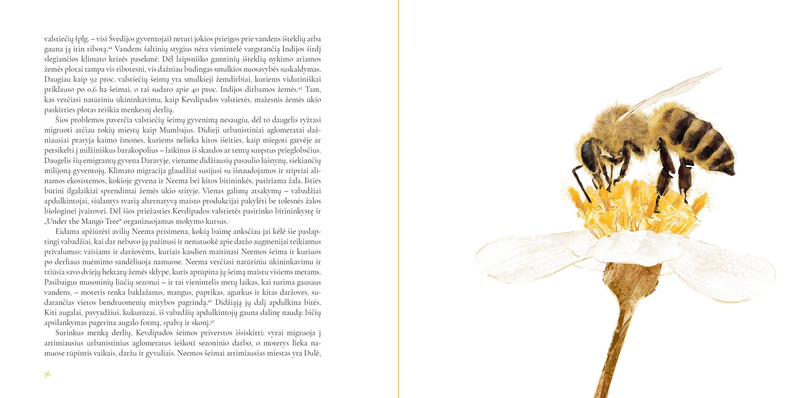 Bičių Revoliucija. Ištrauka 3
