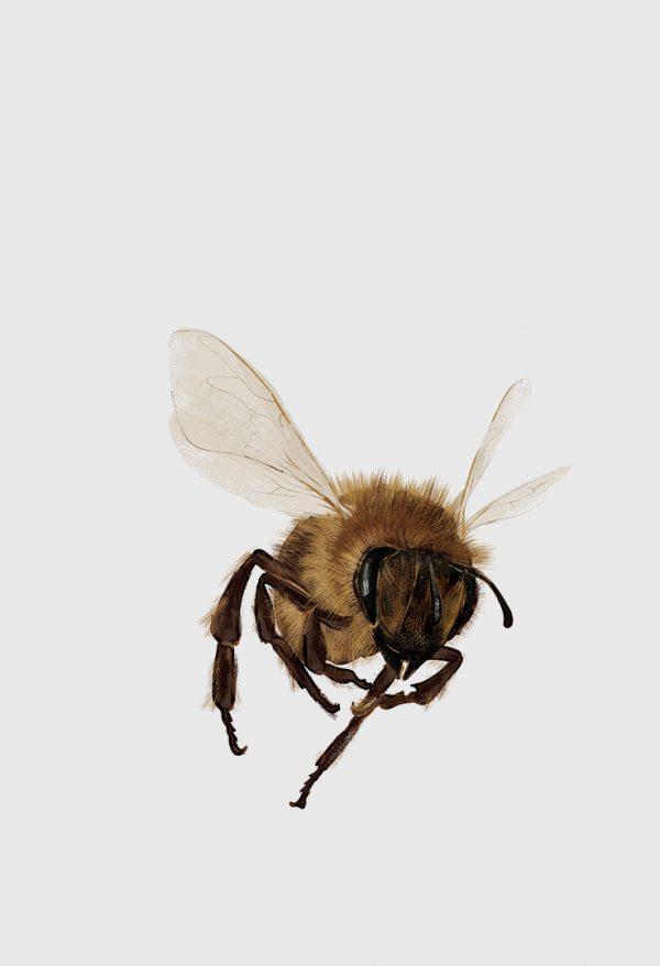 Bičių revoliucija. Kaip išgelbėti mitybą ir žemdirbystę pasaulyje