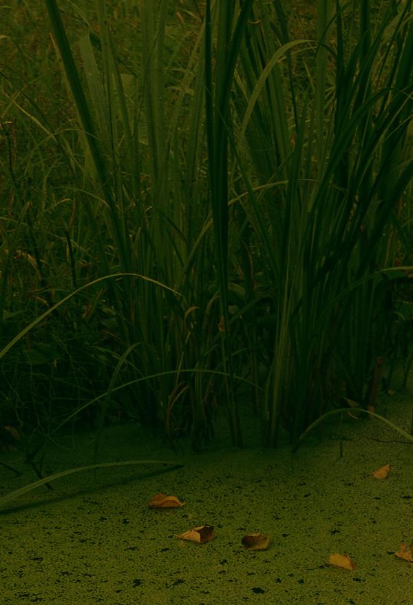 Miško maudynės. Shinrin-Yoku